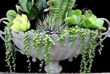 Succulents / by Susan Hurtt Hussien