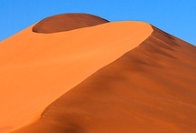 Desert Life / by Susan Hurtt Hussien