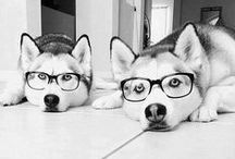 bespectacled animals