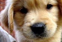 Puppy love <3 / by Majerle Zundel