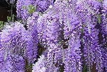 Flower Garden / flowers, garden, flower garden, gardening, gardening tips, perennial flowers, annual flowers, beneficial flowers