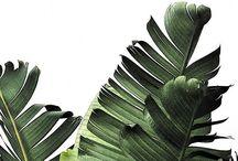 Modern Palm wedding