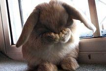 Furries / Animal based cuteness