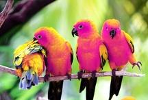 BIRDS / by Claudia Dias