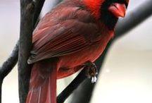 Birds are beautiful / by Ruth Davies