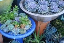 Let's get OUT of here! Gardening in small spaces. / Patio & Balcony ideas specifically for Apartments or Condos