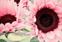 FLOWERS / by Claudia Dias