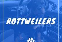 Rottweiler / Rottweilers information including funny puppy photos, training tips, behavior facts, and care of rottweilers and breed mixes.
