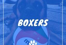 Boxer Dogs / Boxer information including funny puppy photos, training tips, behavior facts, and care of Boxers and dog breed mixes.