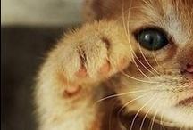 Too Cute! / by Gwendolyn Guthrie