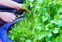 PLANTAS / PLANTAS ORNAMENTALES
