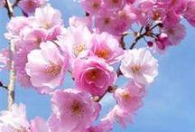 flowers + trees