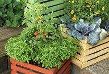 Pots of Veggies / I want to have a go at growing my own veg in a variety of pots .