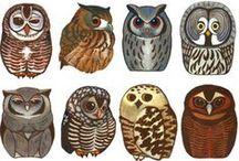 OWL / by MaryFoxHamm