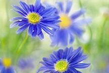 Garden Flowers ✿ / Pin photos of beautiful Garden Flowers here. Happy Pinning.