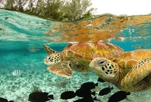 Turtles / by Amy Noga