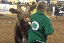 4-H Awesome / by National 4-H