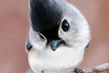 Birds :-)
