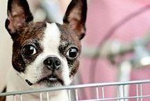 Boston Terriers make the world go round / Boston Terriers  / by Ashley Erdos