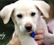 Dogs - It's All About the Dog! / Adopt First! We are proudly rescued by the world's best pup. ♥