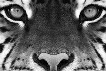 Animals / by Danette Garcia