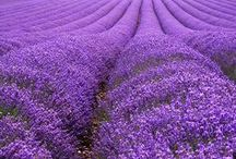"""Passion for PURPLE! / I've always felt a special love for """"The Color Purple,"""" pun intended. In Western Culture, the color purple is a symbol of wealth and royalty. People that rule places are often seen wearing the color purple. Happy pinning, friends & family!  / by Christa Sais"""