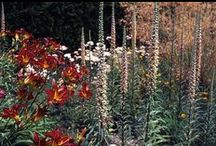 Plant combinations  / by Tracy McQue