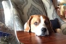 Beagle Love / by Valerie Brady