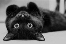 Here Kitty, Kitty... / by Jodi Schumacher-Gorder