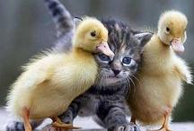 Ooh a Kitty :~) / by Charla Barron