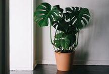 * #homegarden // plants // cacti