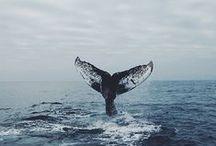 * jellyfish // whale