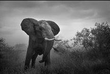 PTA Best of Wildlife Images