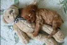 Sleeping puppies