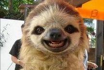 It's A Sloth Life / by Grace Elizabeth