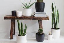 Plant(astic)
