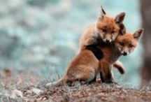 CUTE / Baby animals that just tug at my heart...