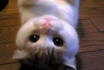 Pour les chats / Cat-related photos, art, and products!