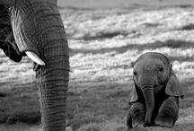 Animals / by Stacy Bernardo- Horton