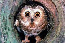 ** Owls **