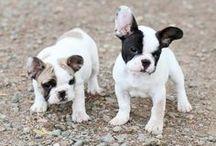 Puppy L<3ve