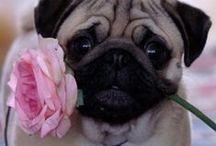 I love Pugs & Pigs