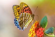 Butterflies / Colorful, vivid butterflies / by Designs By Mamta