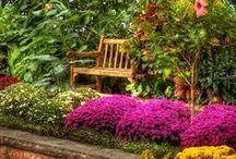 Flower Gardening / by Catherine Patton