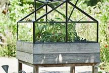 Garden - grow vegetables, flowers, ... / by Marina Tomasini