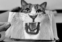 Here Kitty!