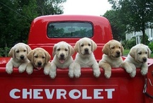 Puppies and Kittens are Cute! / Aww, are you prepared for an overload of cute? Well here it is!