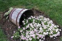 Garden and Yard Idea's / by Sarah Harter