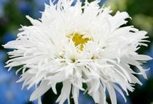 Flowers / by Karen Land