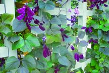 GROW: Arbors, Trellises, and Climbing Vines / Do you love a romantic cottage garden with roses spilling over an arbor or morning glories climbing up a trellis? Find plenty of ideas for incorporating them into your garden here.